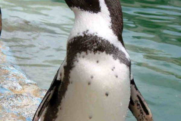 We are sad to announce the loss of Sam the penguin