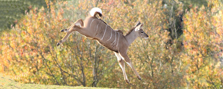 Colchester Zoo Stampede – Half Marathon!