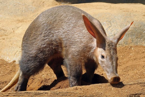 Aardvark Experience