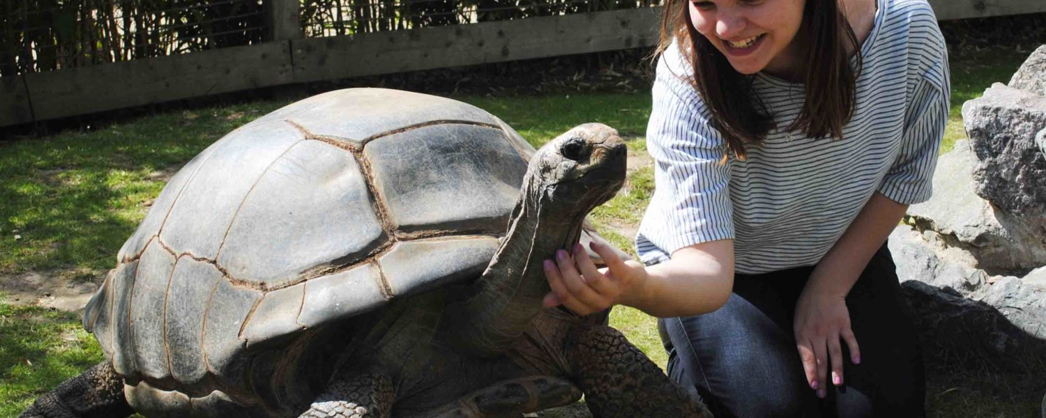 Giant Tortoise Experience