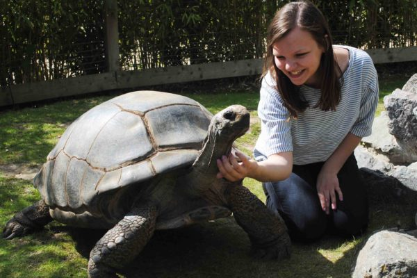 Meet the Tortoises