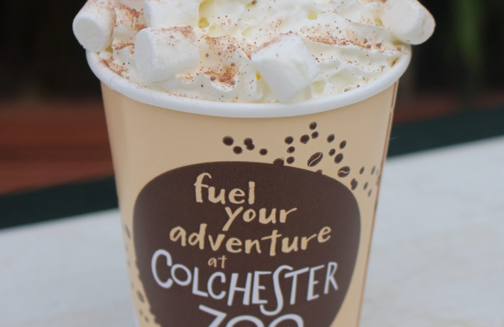 Hot Chocolate cup with whipped cream and marshmallows