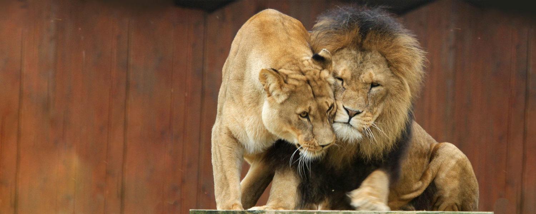 African Photography Safari