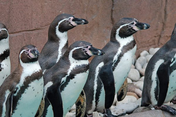 Wake Up with Colchester Zoo!