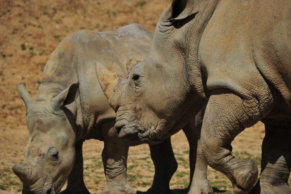 White Rhino Experience