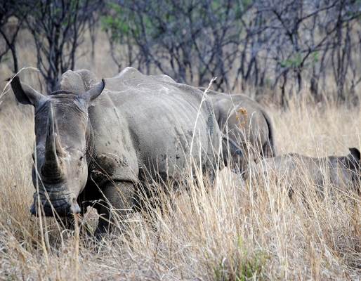 Supporting Save the Rhino