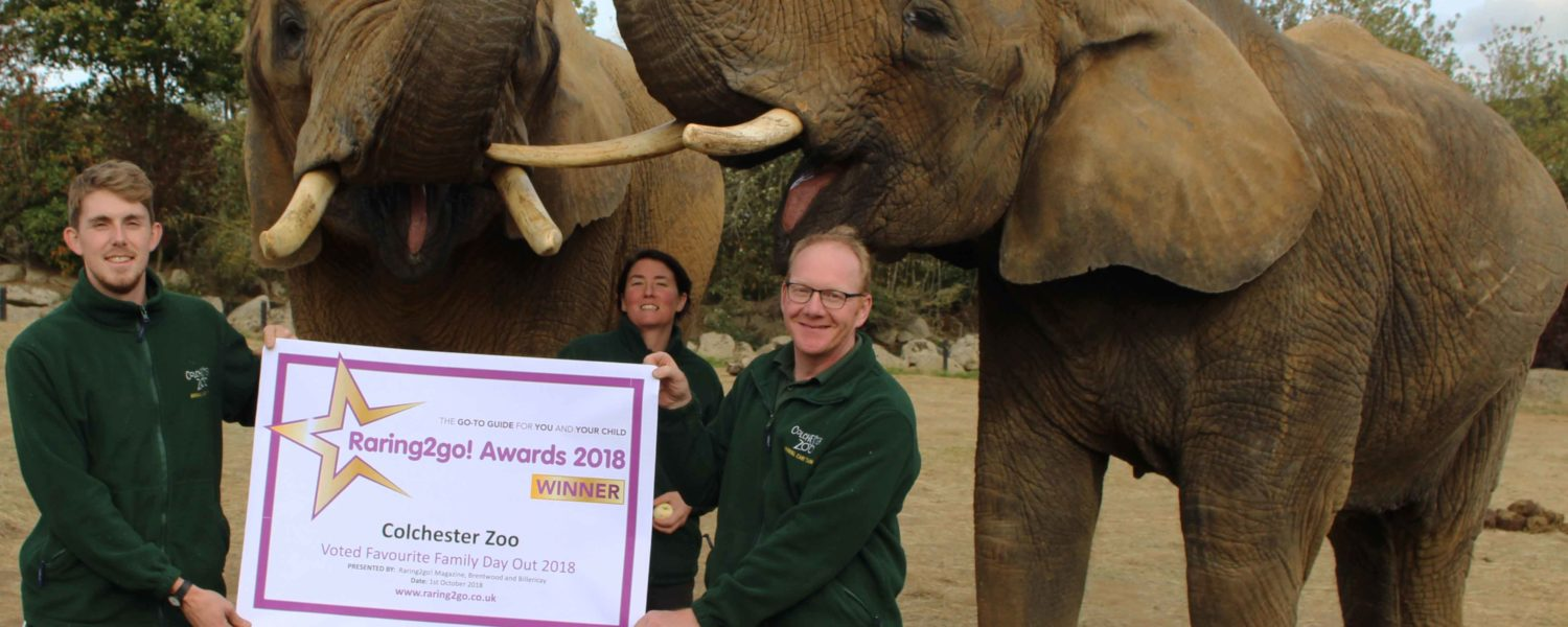 Colchester Zoo WIN Raring to go award!
