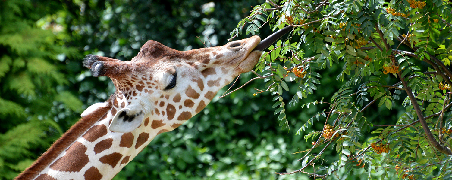 Summer Holidays at Colchester Zoo!
