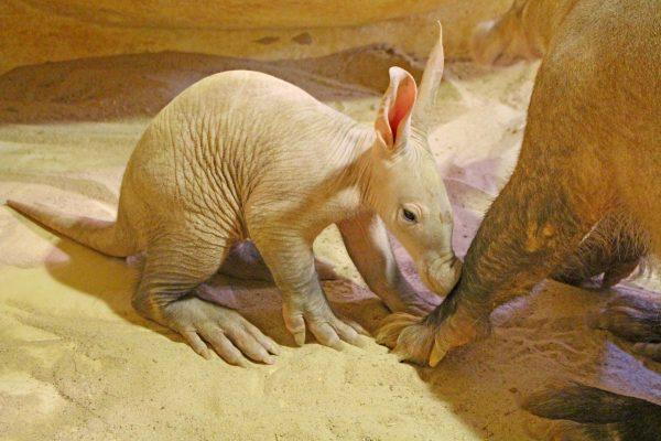 Aardvark group grows again!