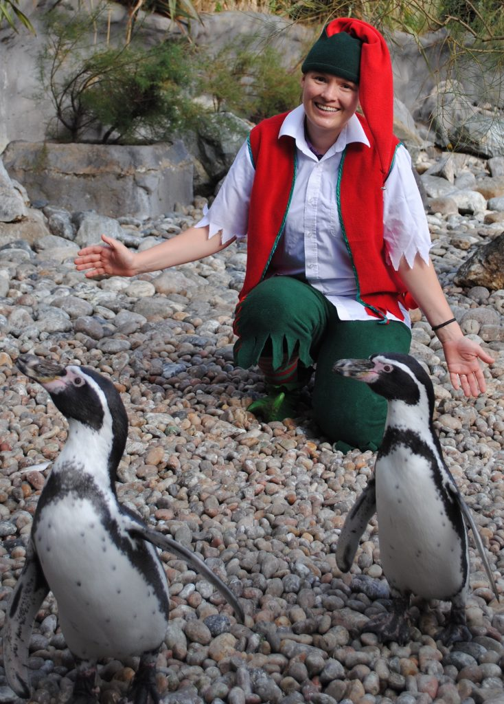 Christmas elf on pebbles with 2 penguins in the foreground
