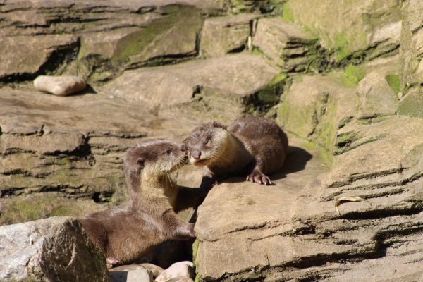 Our otter pair have been named!
