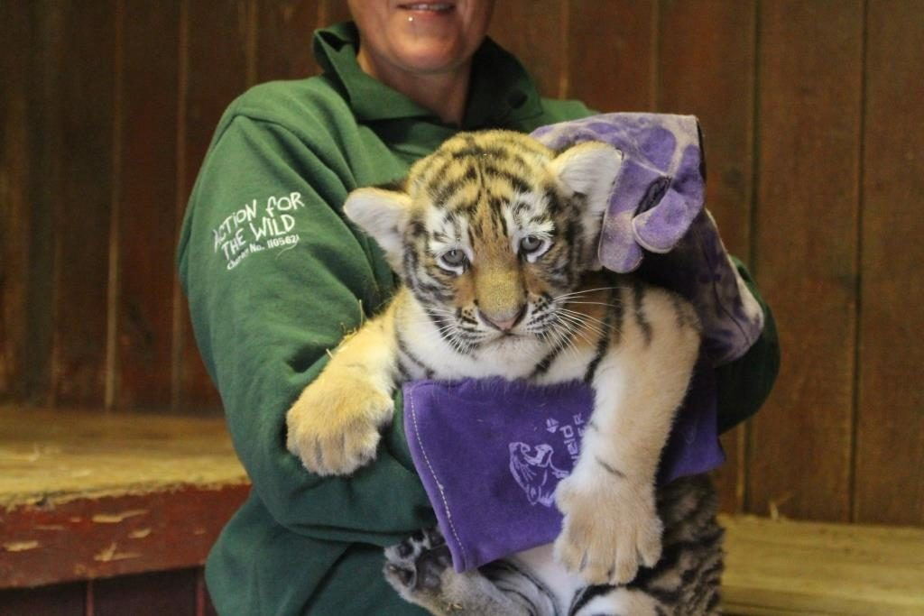 Our tiger cubs go exploring!