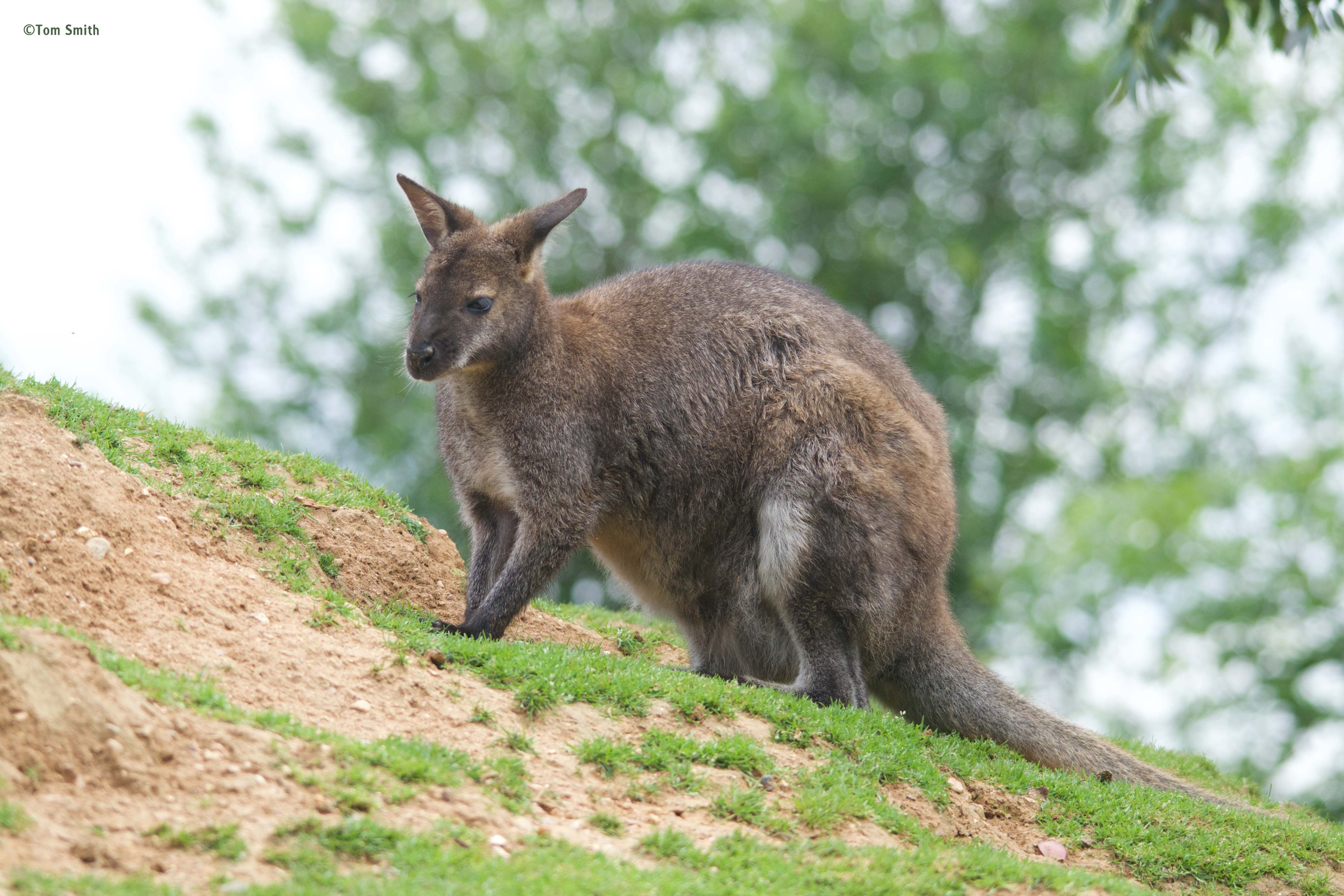 Our wallaby group has grown!