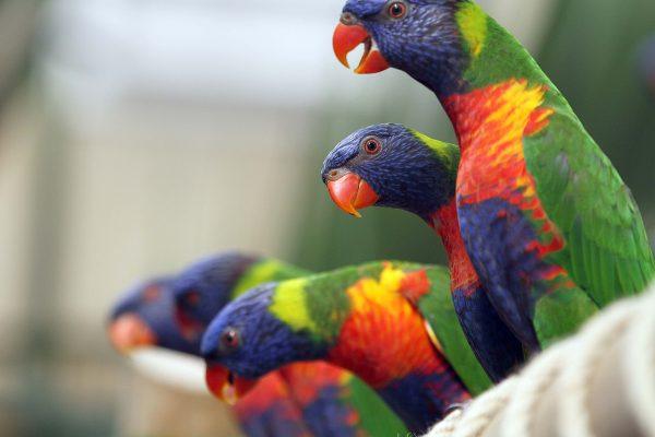 Zoo Pass Prices