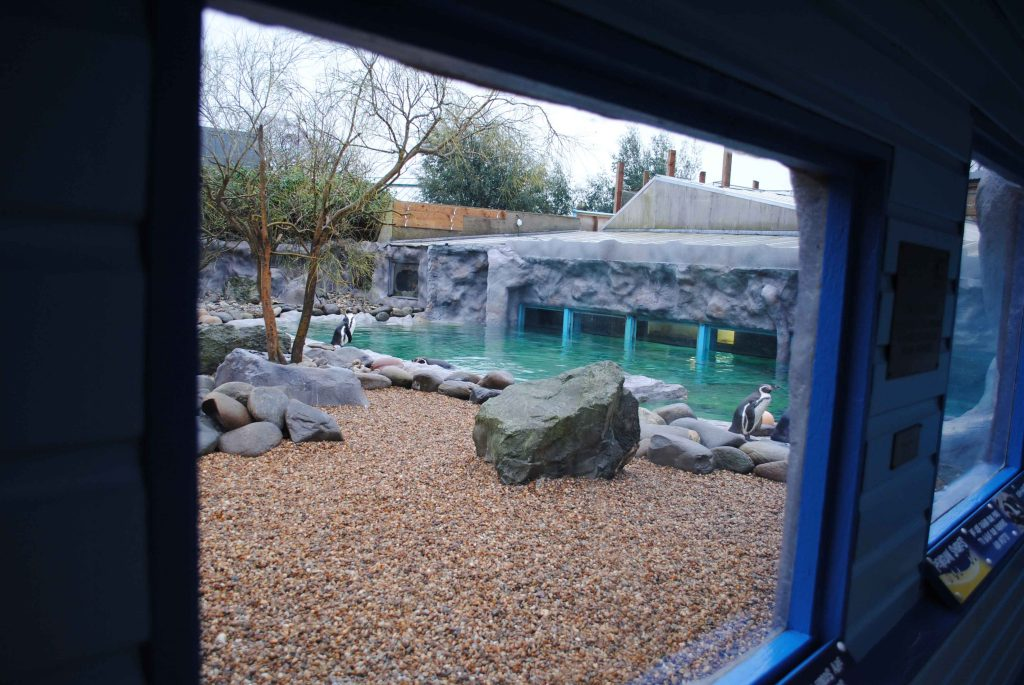 View of penguin enclosure through a glass window