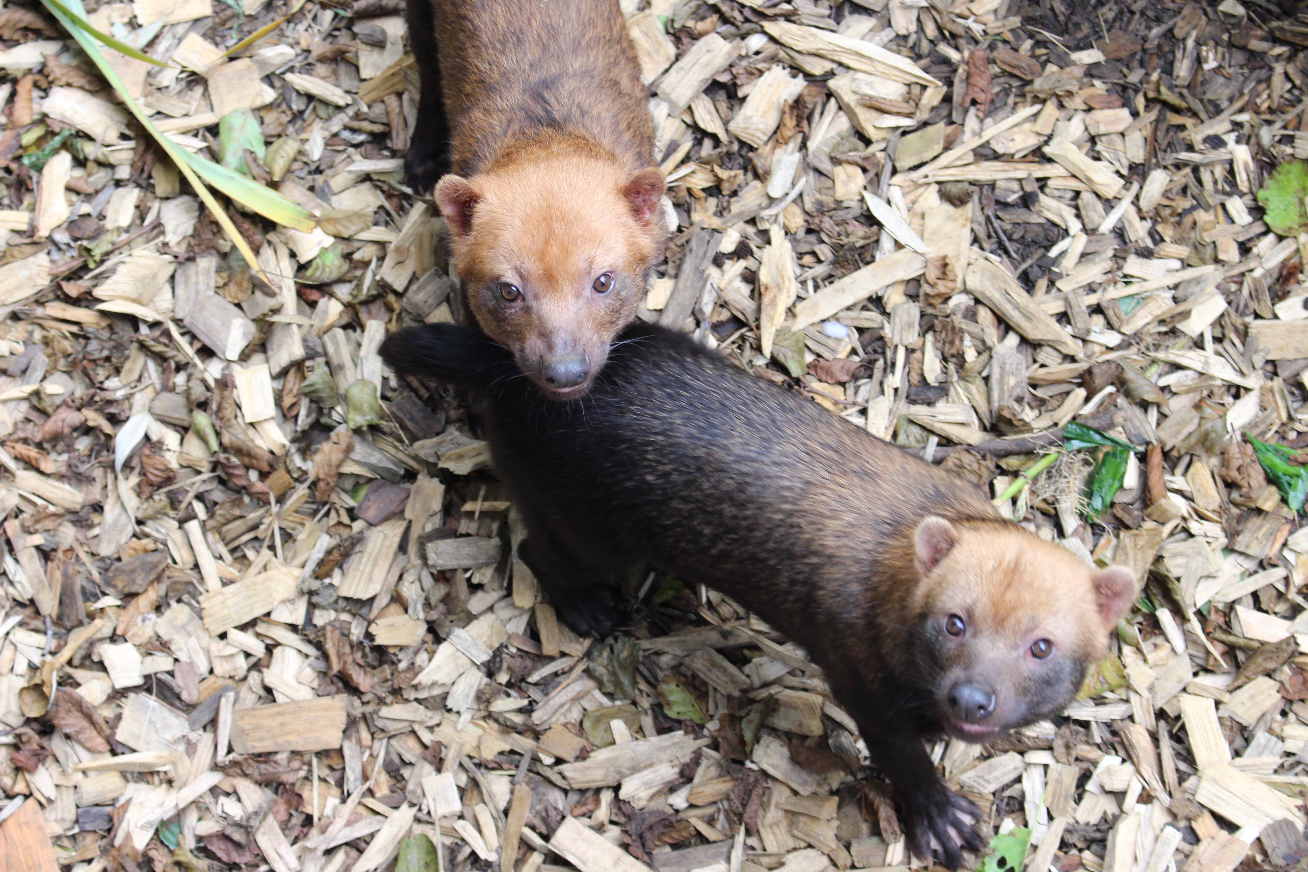 Our Bush Dog pups have been named!