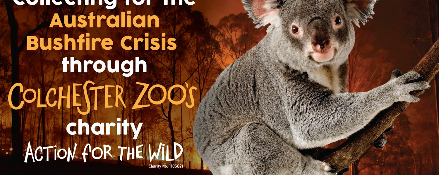 Action for the Wild Fundraising