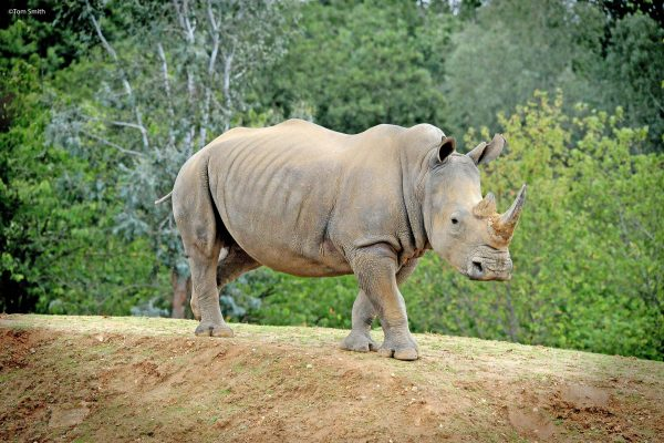 BIG News for our rhino crash!