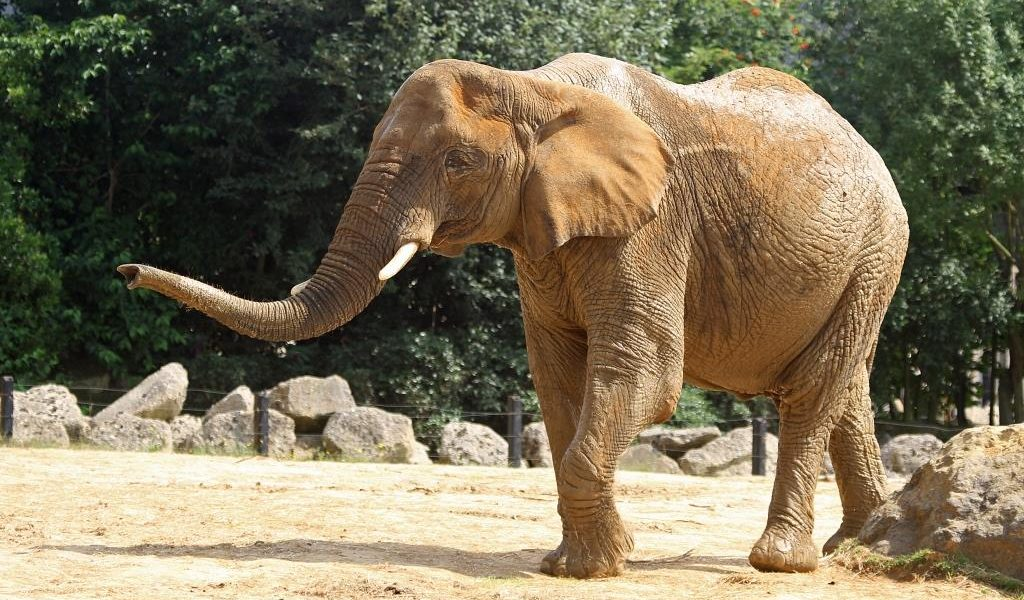 NEW: Exclusive Elephant or Giraffe Feeding Experience