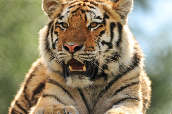 Dear Friends of Colchester Zoo…