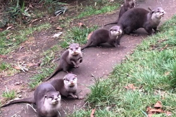 Otter pups are named!