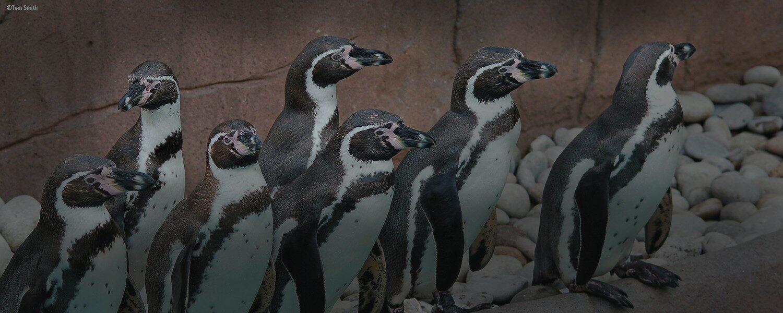 Christmas Penguin Educational Experience